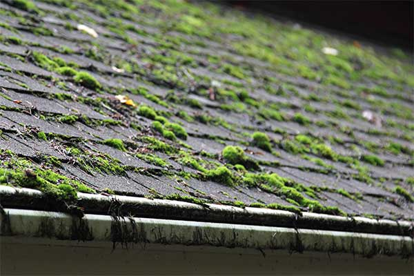 How Fungus Can Damage Your Roof | Oaks Construction